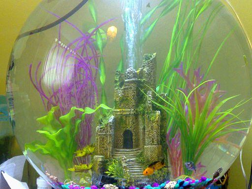 biorb fish tank with decorations