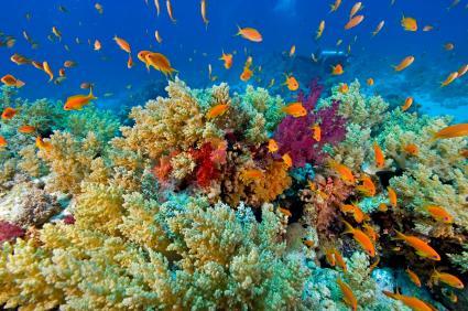 Keeping Corals in Your Aquarium