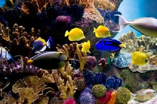 Salt Water Fish Tanks on Setting Up A Saltwater Aquarium